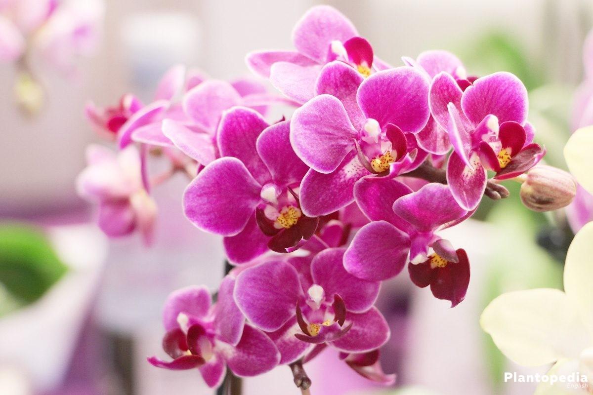 Comment soigner ses orchidées
